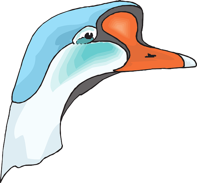 head, blue, white, bird, goose, animal, beak