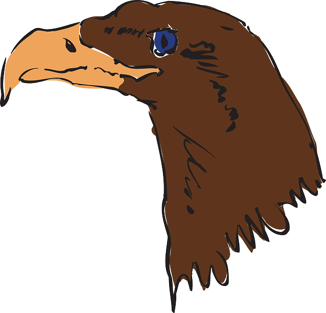 head, brown, eagle, bird, art, beak, feathers