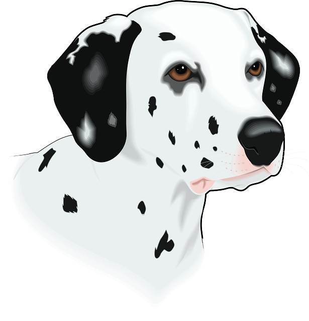 head, dog, pet, animal, mammal, spots, breed, spot