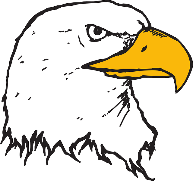 head, eagle, bird, bald, art, beak