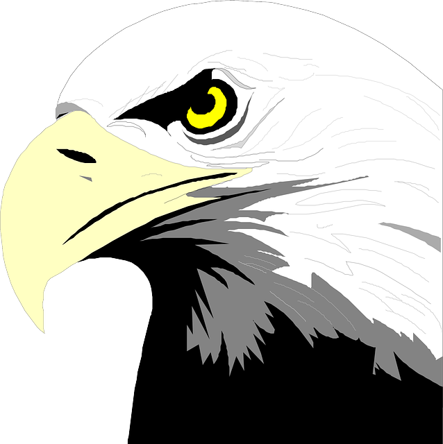 head, eyes, eagle, bird, bald, art, beak, feathers