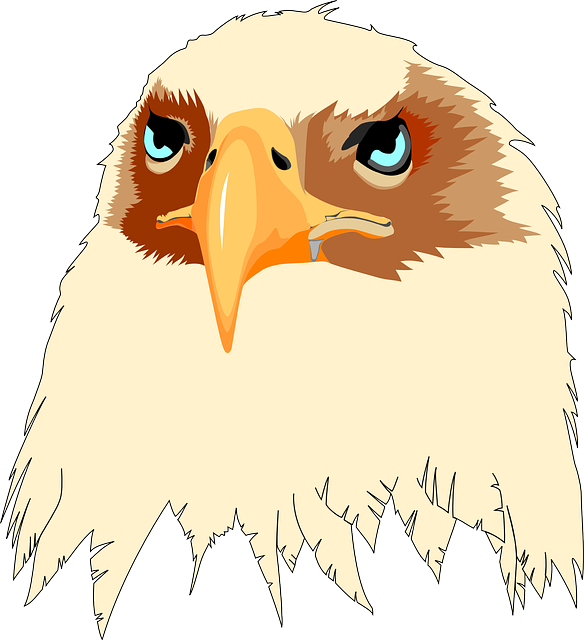 head, eyes, eagle, tan, bird, art, beak, feathered