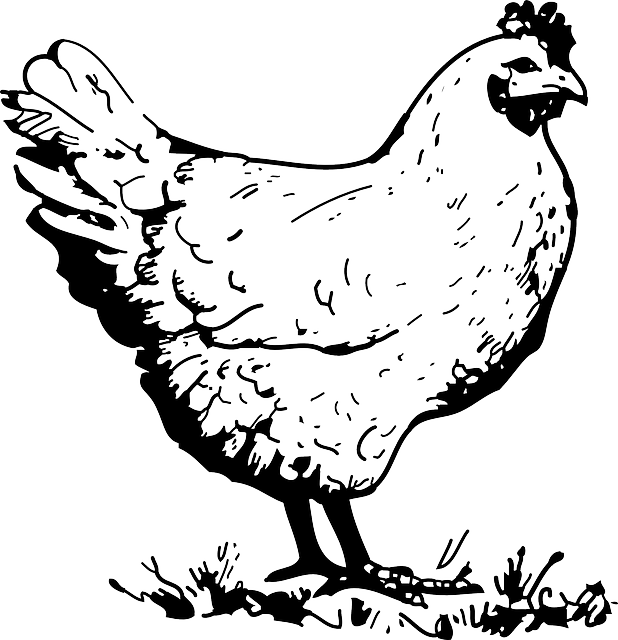 hen, chicken, poultry, animal, black, outline, drawing