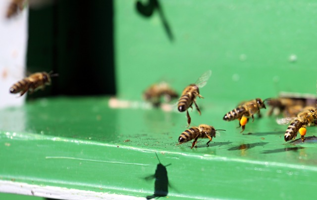 hive, beehive, bee, bees, animals, insect, landing