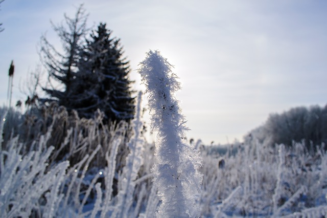 hoarfrost, plant, iced, cold, icy, frost, nature