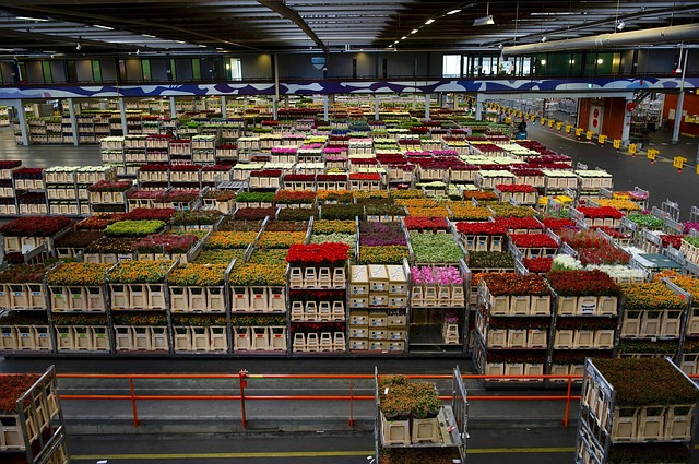holland, flowers, business, warehouse, varieties