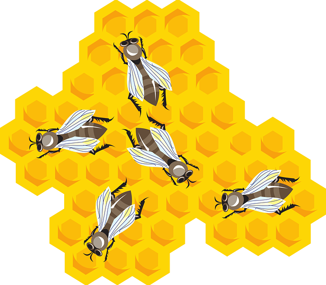honey, cartoon, hive, wax, bees, combs, bee, comb