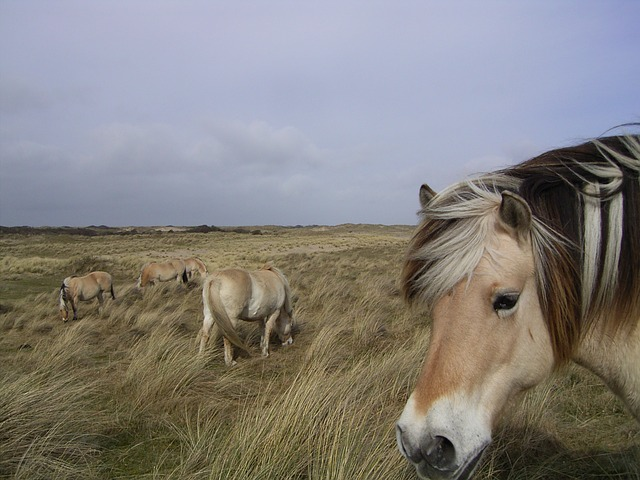 horse, animal, horse head, farm, norway, pasture