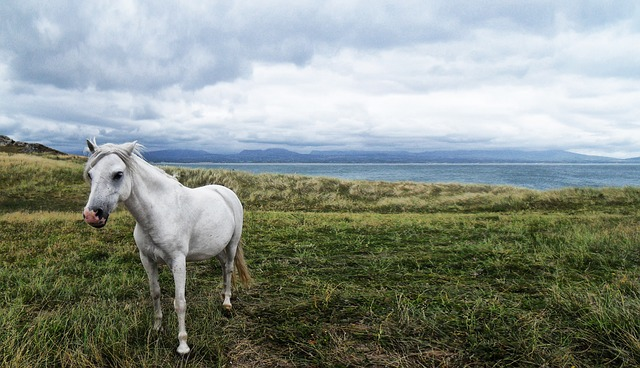 horse, animal, unicorn, hdr, white
