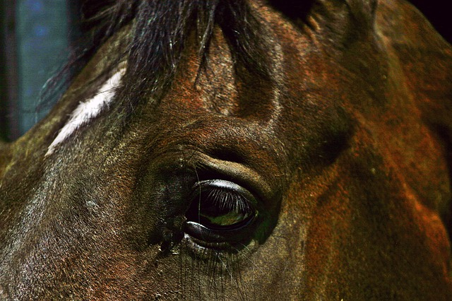 horse, brown, horse head, horse eye, interested, animal