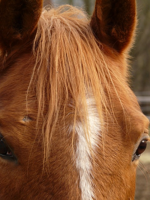 horse head, horse, eyes, animal, fur, dear, pony