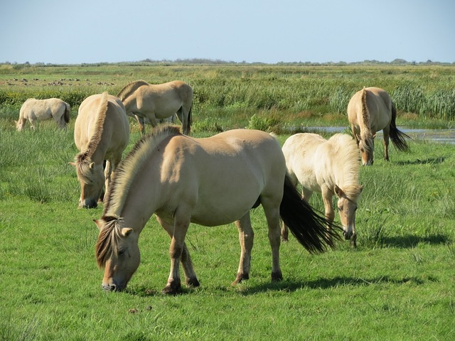 horse, pasture, denmark, skjern, summer, europe, north