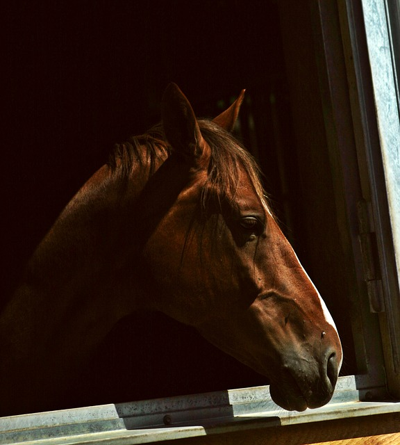 horse, pferdeportrait, horse head, install window