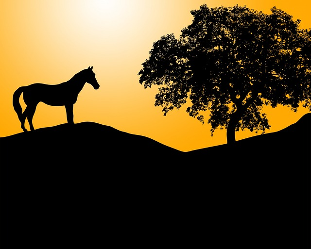 horse, pony, animal, equine, black, silhouette, sunset