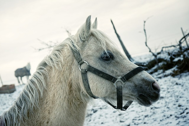 horse, winter, horse head, animal