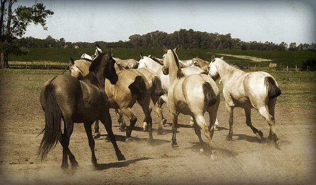 horses, animal, stylized, argentina