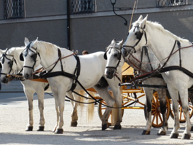 horses, horse drawn carriage, mold, tourism, salzburg