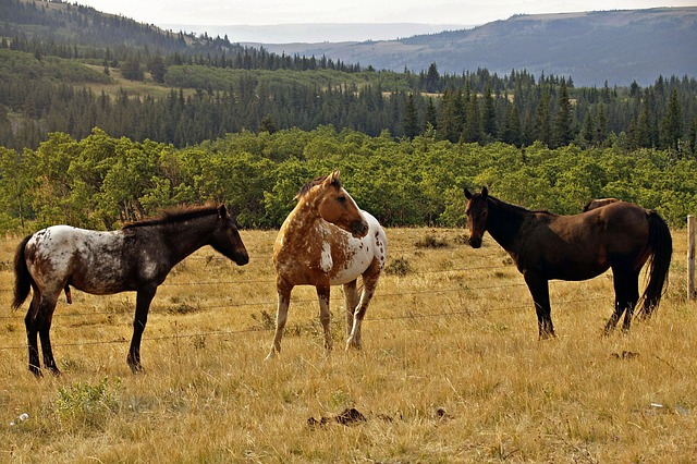 horses, wildlife, animals, landscape, montana, nature
