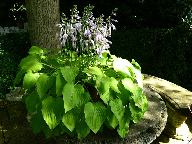 idyll, garden bench, plant, light and shadow