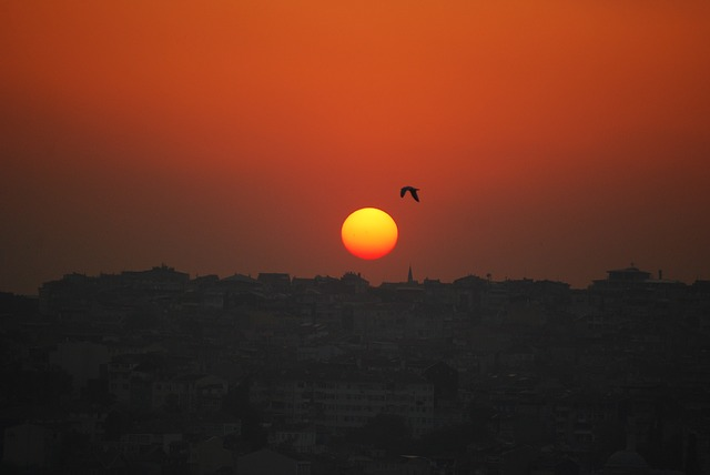 istanbul, turkey, sunset, seagull, bird