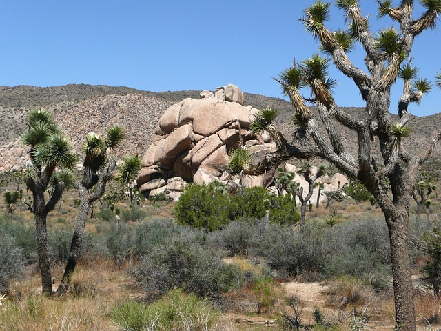 joshua tree national park, joshua tree, california, usa
