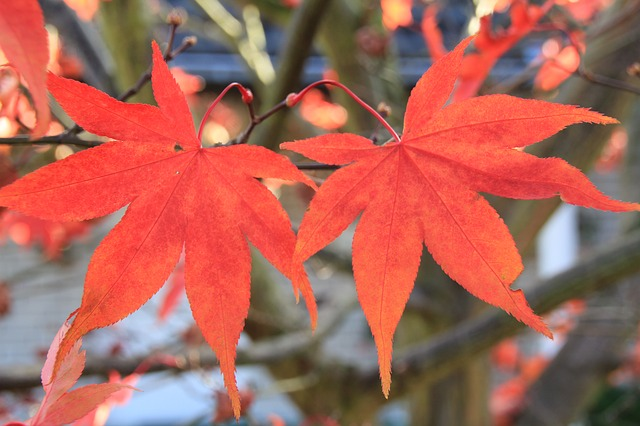 journal, leaves, autumn, tree, forest, plant, red
