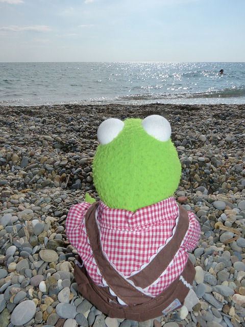 kermit, frog, sea, lonely, sea ??view, sit