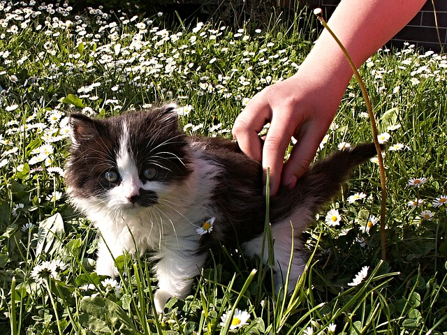 kitten, black, white, detail, hand, lawn, garden