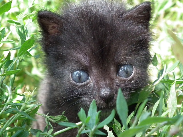 kitten, little, cat, pets, animals, cat eyes, cat's eye