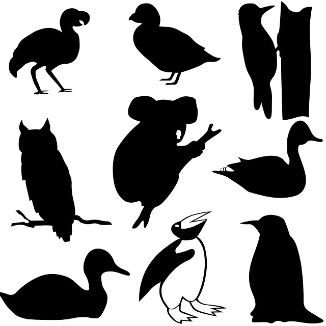 koala, bird, icon, flock, black, graphic, pattern