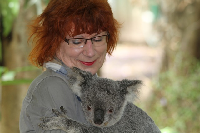 koala, phascolarctos cinereus, woman, man, encounter