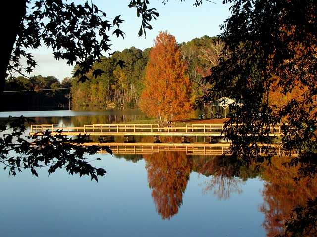 lake, water, tree, landscape, scenery, nature, fall