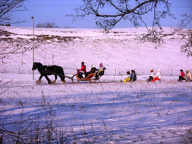 landscape, winter, snow, ice, sleigh ride, horse