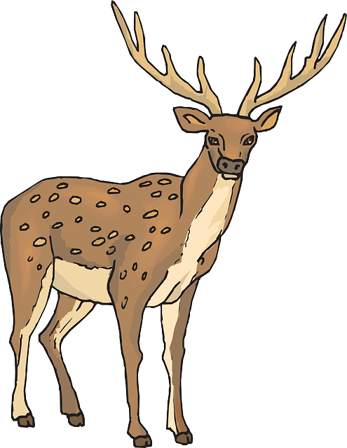 large, deer, wild, forest, standing, animal, with