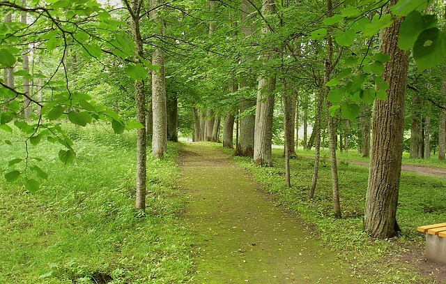 latvia, forest, trees, woods, park, walkway, lane