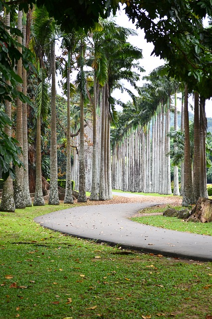 leading line, road, path, trees, garden, peradeniya
