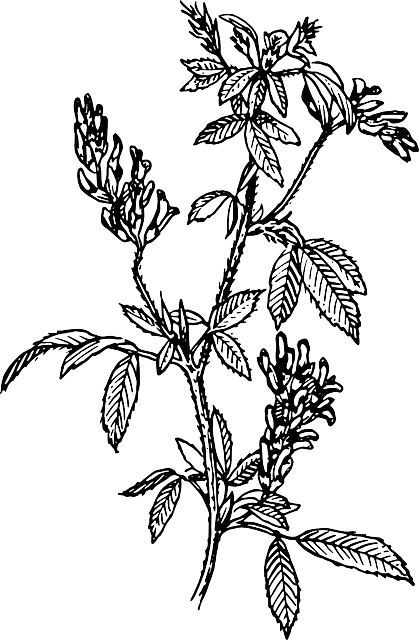 leaf, branches, flower, plant, leaves, bush, herb