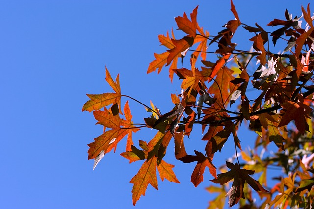 leaf, leaves, red, autumn, fall, sky, blue