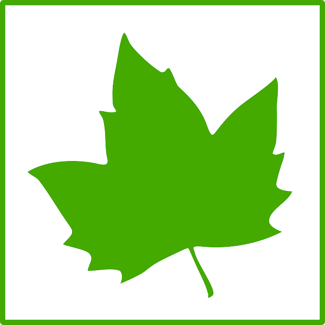 leaf, maple leaf, maple, ecology, green