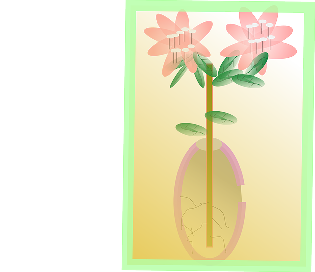 leaf, roots, flower, bloom, plant, leaves, stem