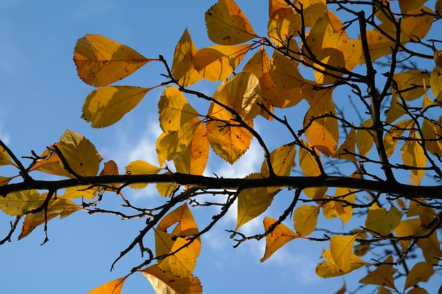 leaves, road, yellow, autumn, fall foliage, sky