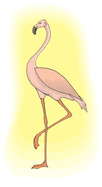 light, pink, bird, flamingo, long, neck, animal, beak