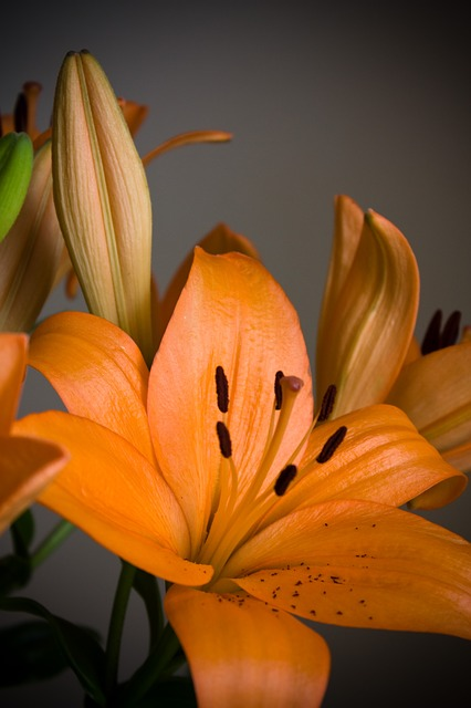 lilies, lily, name, greeting, white, orange, occasion