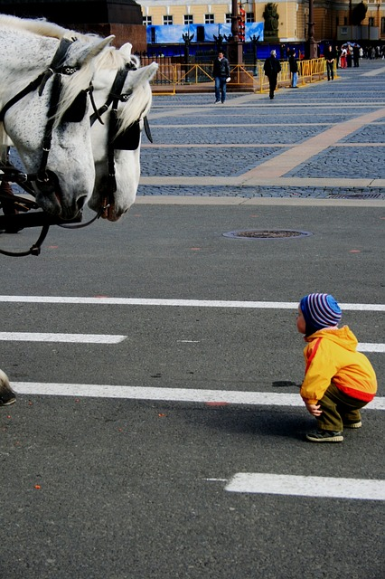 little boy, hunching, curiosity, horses, looking