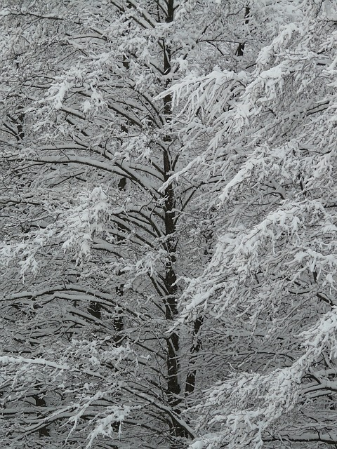 log, snowy, winter, snow, trees, icy, cold, white