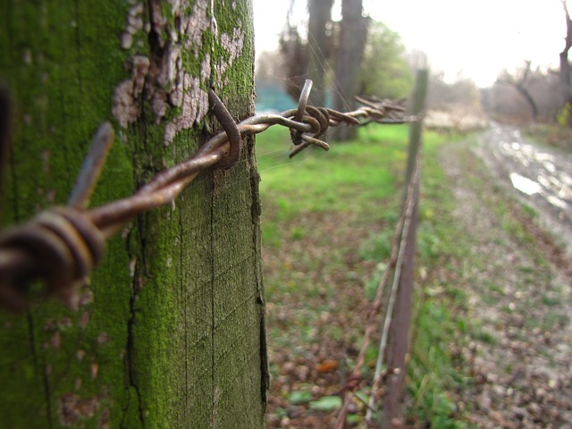 macro, barbed wire, autumn, metal, iron, spike, wire