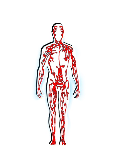 man, blood, veins, aterien, system, body, medical
