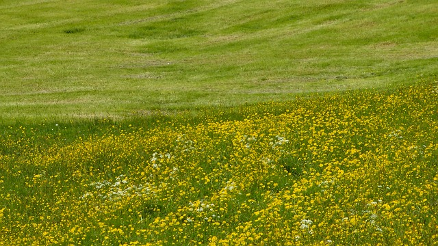 meadow, flower, flowers, grass, spring, nature, bloom