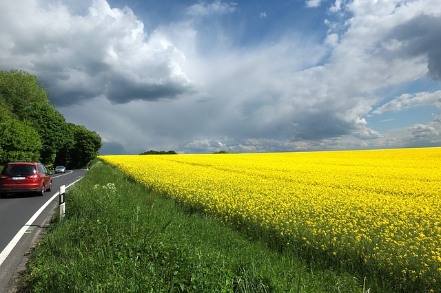 mettmann, oilseed rape, clouds, yellow