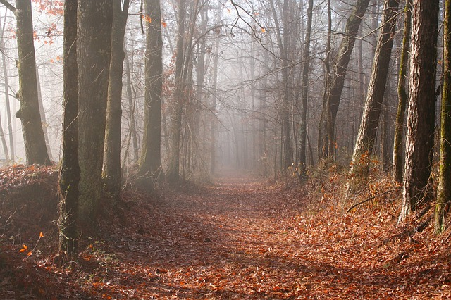 mississippi, forest, woods, fall, autumn, fog, trail